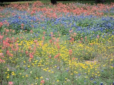 Wildflower Garden Ideas wildflower garden Garden Design With Wildflower Garden Update Help Needed Warren Expressed Warren With Yard Landscaping Ideas