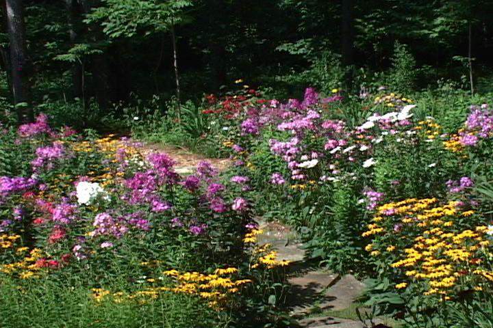 Wonderful A Wild Flower Tale » Wild Flower Garden Design Ideas